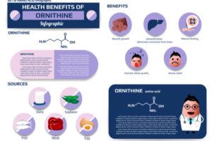 オルニチンの化学的説明